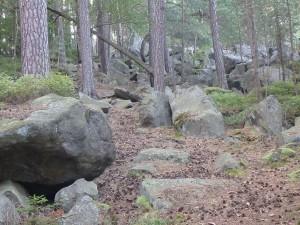 Kiefernwald mit Felsblöcken