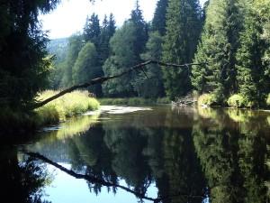 Toter Ast hängt über dem Fluss