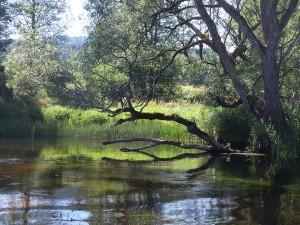Uferstreifen