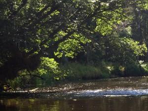 Sonnenlicht im Ufergebüsch