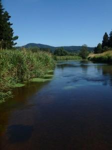 Wiesen säumen den Fluss