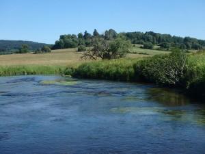 Weiden am Fluss