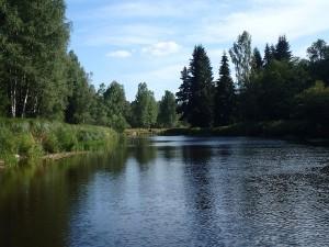Flussschleife mit Fichtenwald