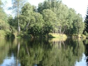 Birken spiegeln sich im Wasser