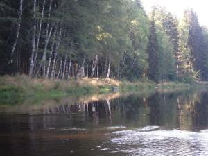 Birken am Ufer