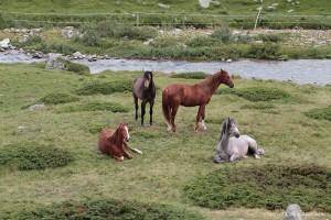 Coole Pferde direkt neben der Bahnlinie