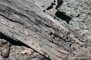 Stein oder Holz?