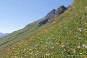 Wunderschöne Bergwiese