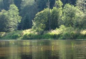 Sonnenlicht auf dem Ufergebüsch