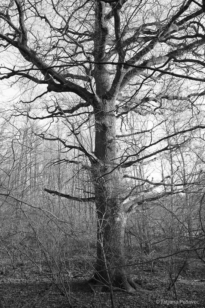 ein Riese mitten im Wald
