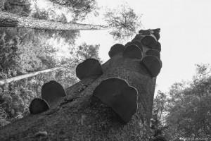 Buche mit Baumpilzen
