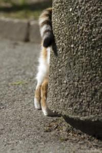Katze, Rückansicht