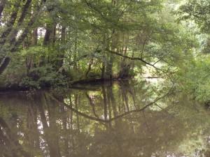 Ein überhängender Ast spiegelt sich im Fluss