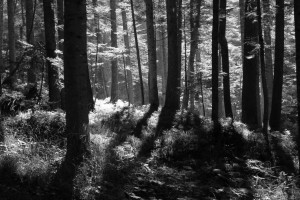 Schattenspiel zwischen den Bäumen