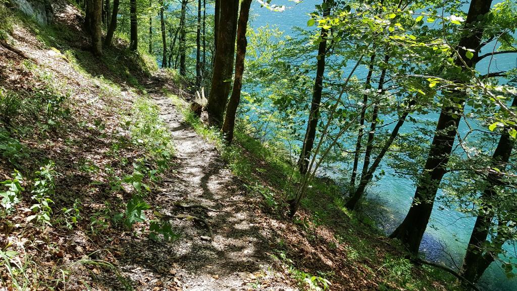 Waldpfad am Ufer des Königssees