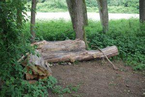 Das durchaus bequeme Baumstamm-Sofa